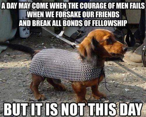 08-funny-dog-meme