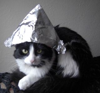 Sasha-cat-in-tinfoil-hat-cropped-620x574