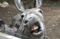 Donkey-party1