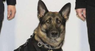 636596660175939370-Eli-Troy-police-canine..sized-770x415xt